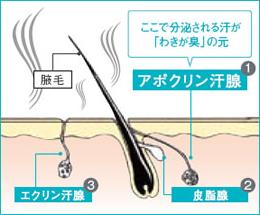 screenshot-www.modernbeauty.jp 2015-02-16 15-43-01